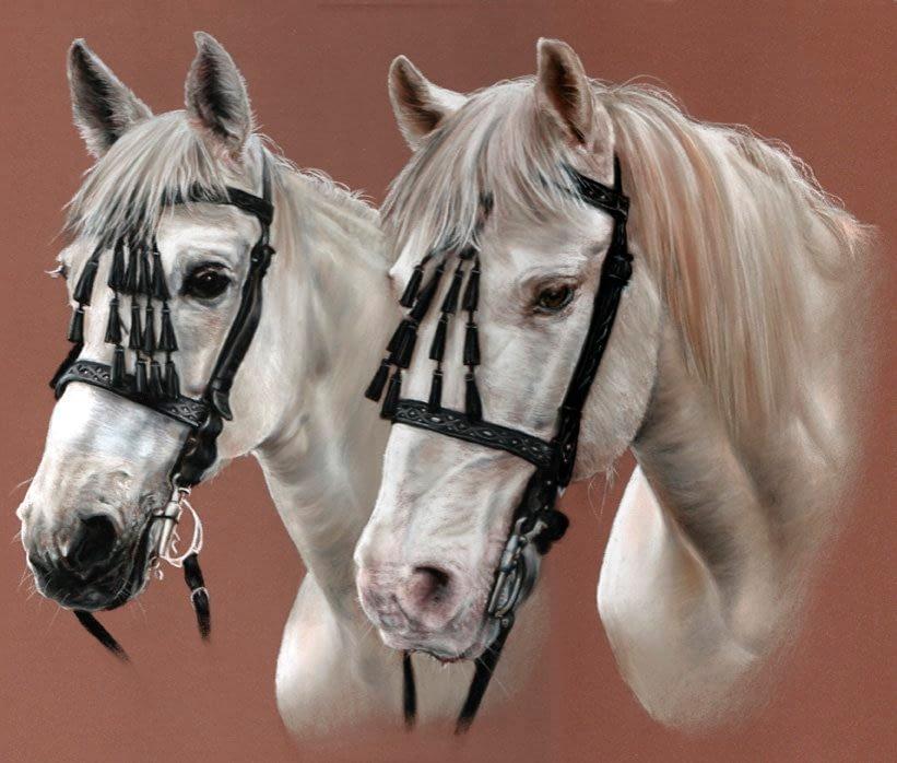 Double grey horse portrait in pastel