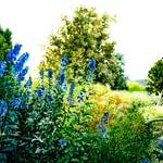 Garden painting in watercolour