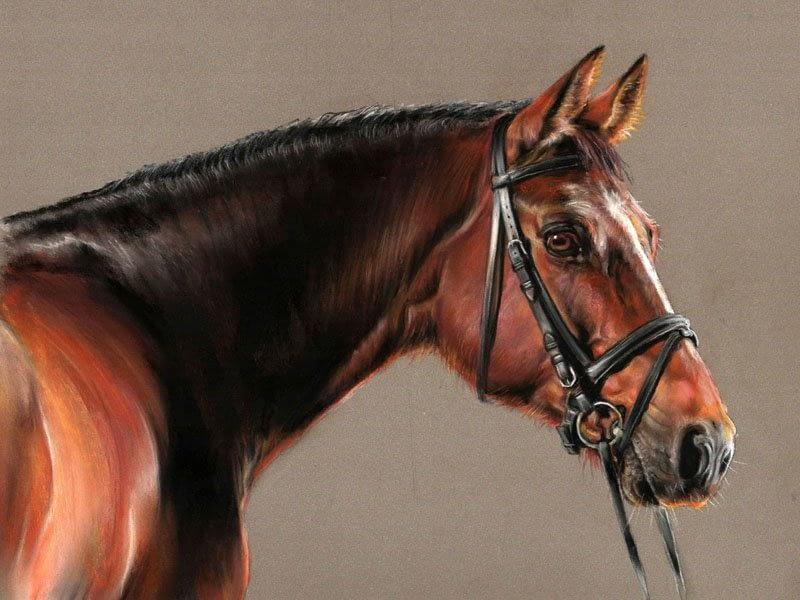 Bay horse pastel portrait