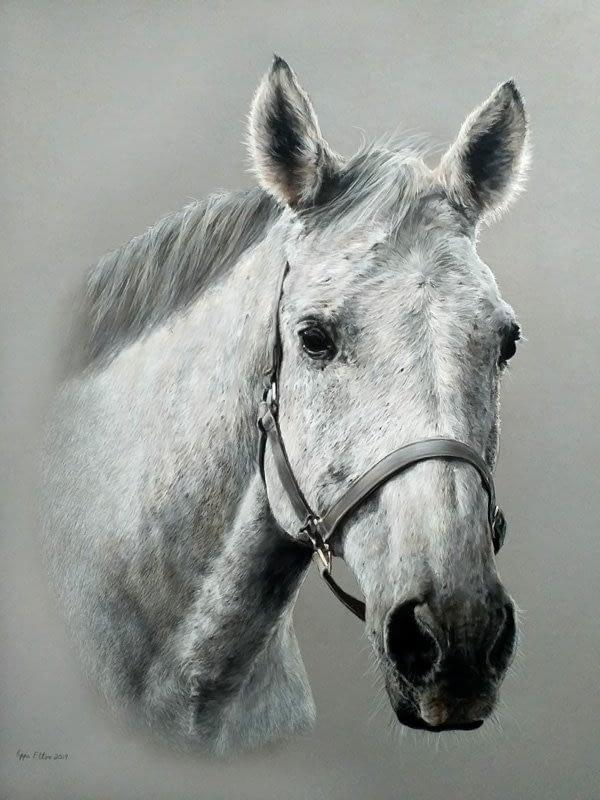 Grey horse portrait in pastel