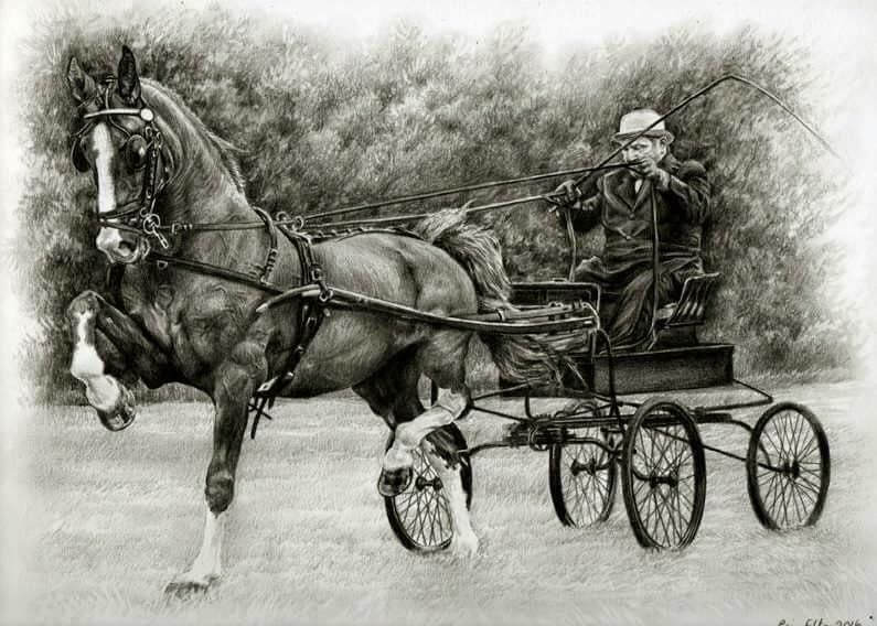 Equestrian portrait in pencil