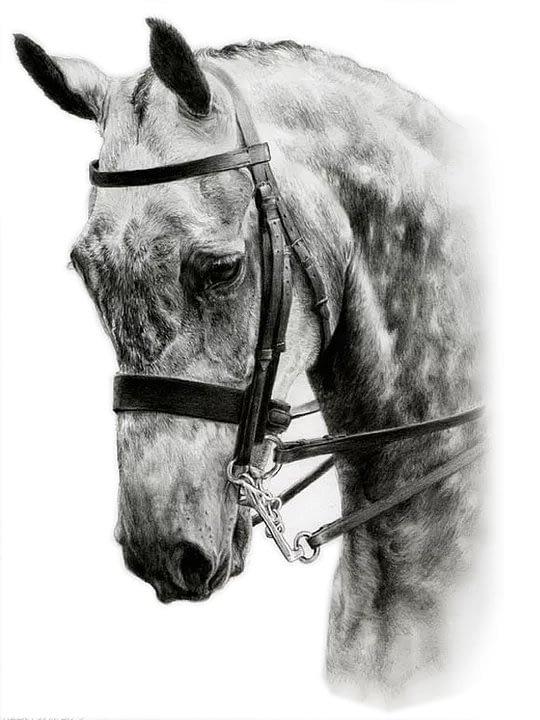 Grey horse pencil portrait