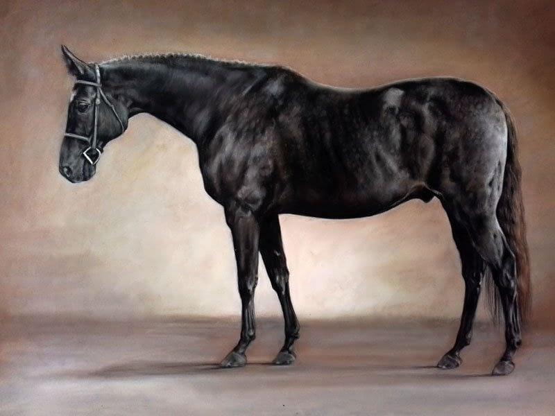 Black horse portrait in pencil