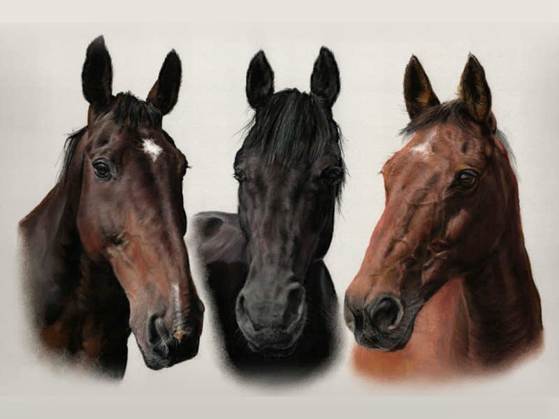 Horse triple portrait in pastel