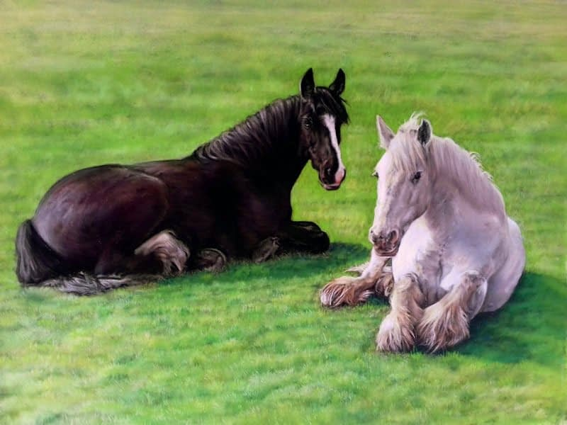 Double horse portrait in pastel