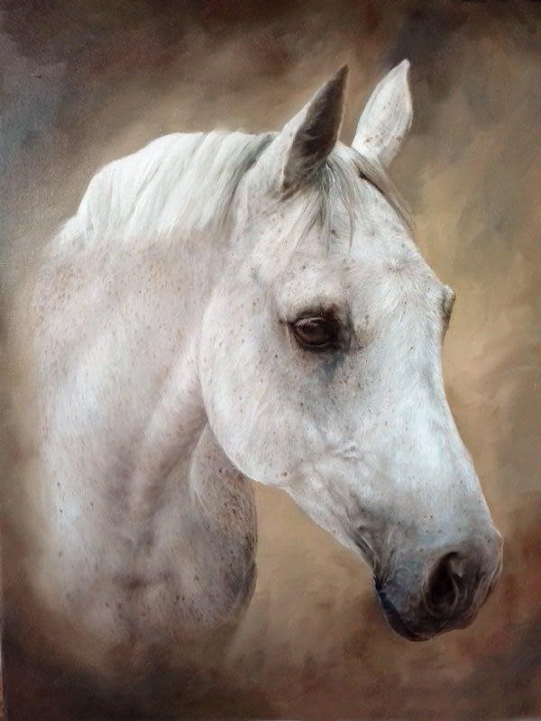 Grey horse portrait in oils