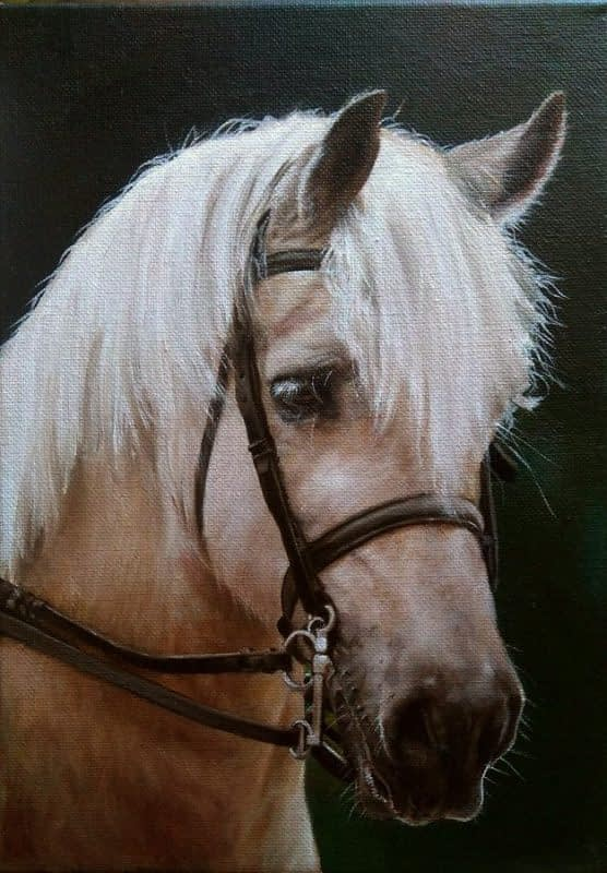 Pony portrait in oils