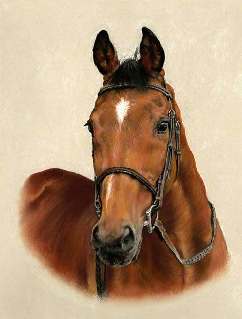 Bay horse portrait in pastel